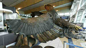 A giant eagle sculpture that was being used to promote The Hobbit film trilogy after a 6.3 quake caused it to fall from the ceiling of the Wellington Airport on Monday.