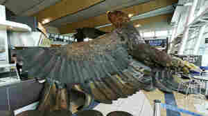 New Zealand Quake Shakes Eagle Sculpture From Airport Perch