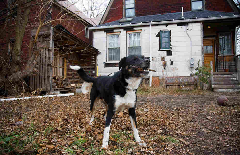 Philip's dog, Gratiot — a name he shares with a county and other Michigan landmarks — in his back yard.