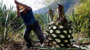 Episode 512: Can Mezcal Save A Village?