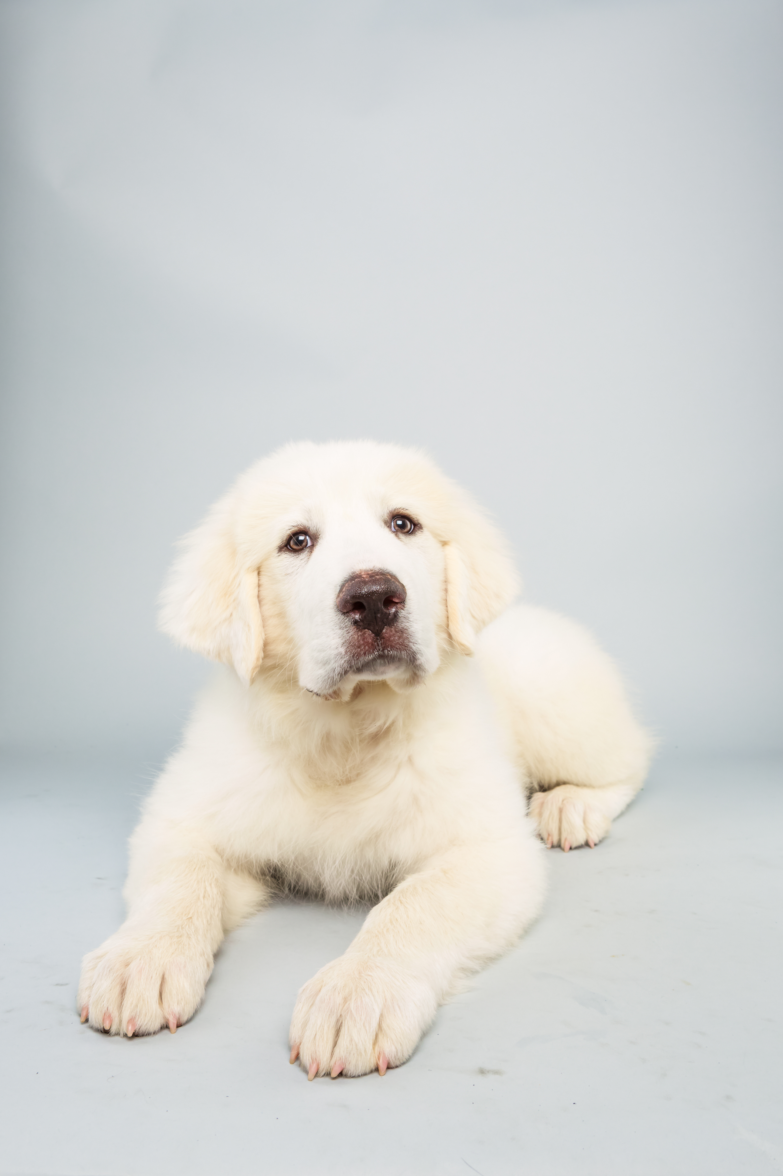 Shyla Age: 14 weeks Breed: Great Pyrenees Fact: Loves to snowboard.