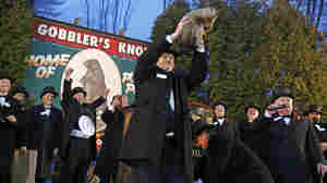 Punxsutawney Phil is held by handler John Griffiths after emerging from his burrow to see his shadow and forecast six more weeks of winter weather.