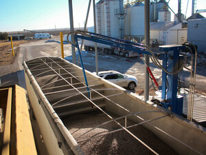 A robotic arm at Clarkson Grain takes a sample of blue corn to be tested for GMOs.