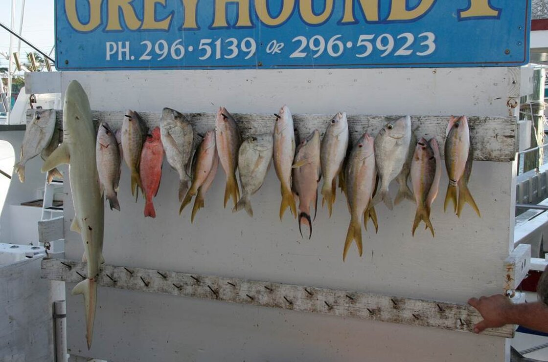 In 2007, the shrinking fish tale continued to play out on the Hanging Board.