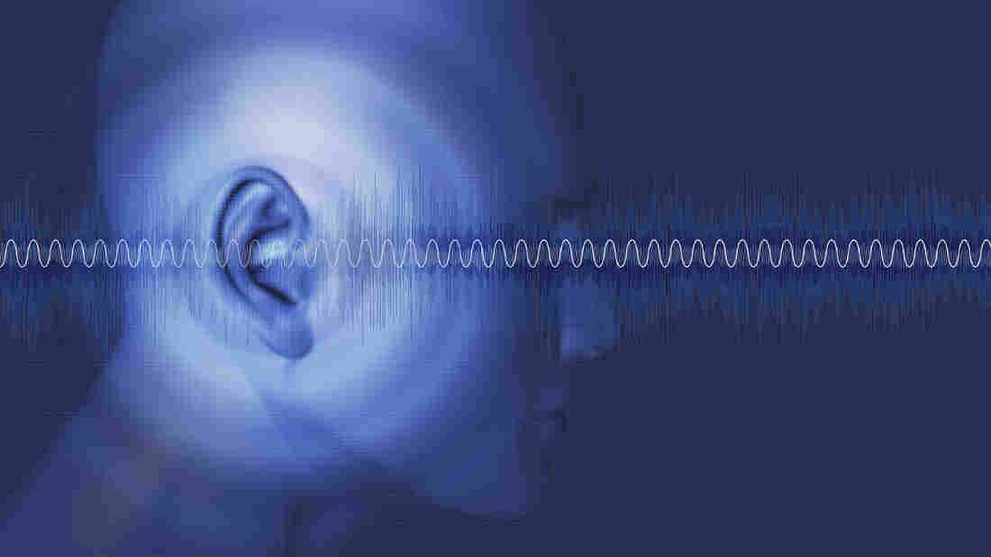 Certain sorts of hearing loss stem from the way the brain processes sound.