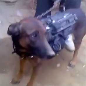 The Taliban holding what they claim is a U.S. military dog.