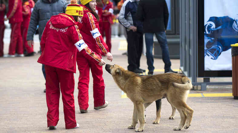 Olympic volunteers pet a stray dog in downtown Sochi, Russia, on Tuesday. The city's long-standing contract with a pest control company has animal right groups concerned about the fate of the many strays roaming the area.