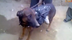 Members of Taliban holding what they say is a U.S. military dog.