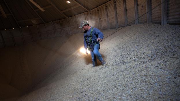 Grain Operator Austin Clubb surveys corn inside the Homestead Grain Facility at Amana Farms near Cedar Rapids, Iowa. (NPR)