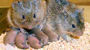 Learning About Love From Prairie Vole Bonding