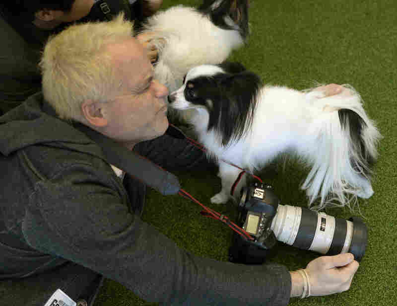 A Papillon kisses UPI photographer John Angelillo at a press event before the competition.