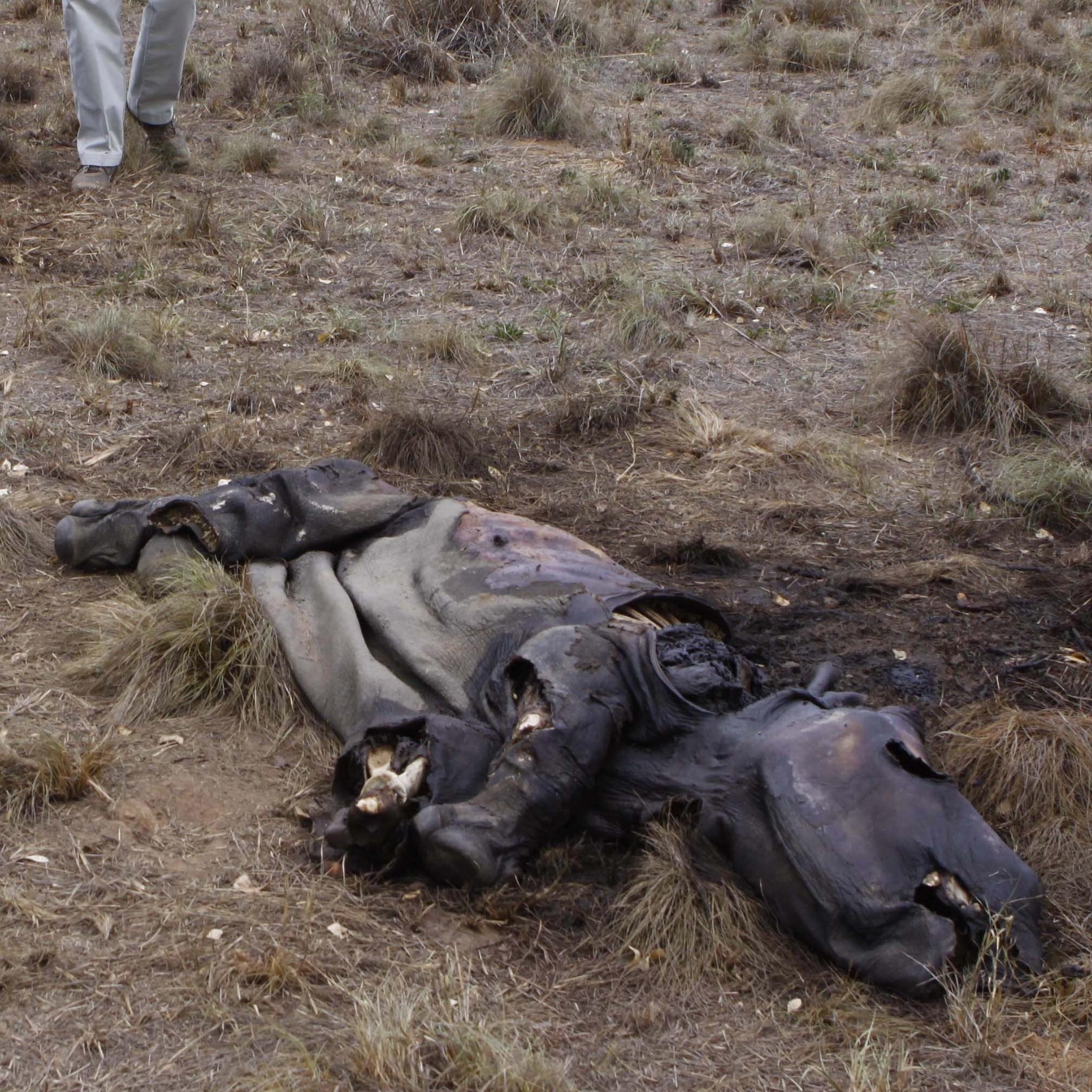 Elephant Poaching Weapons