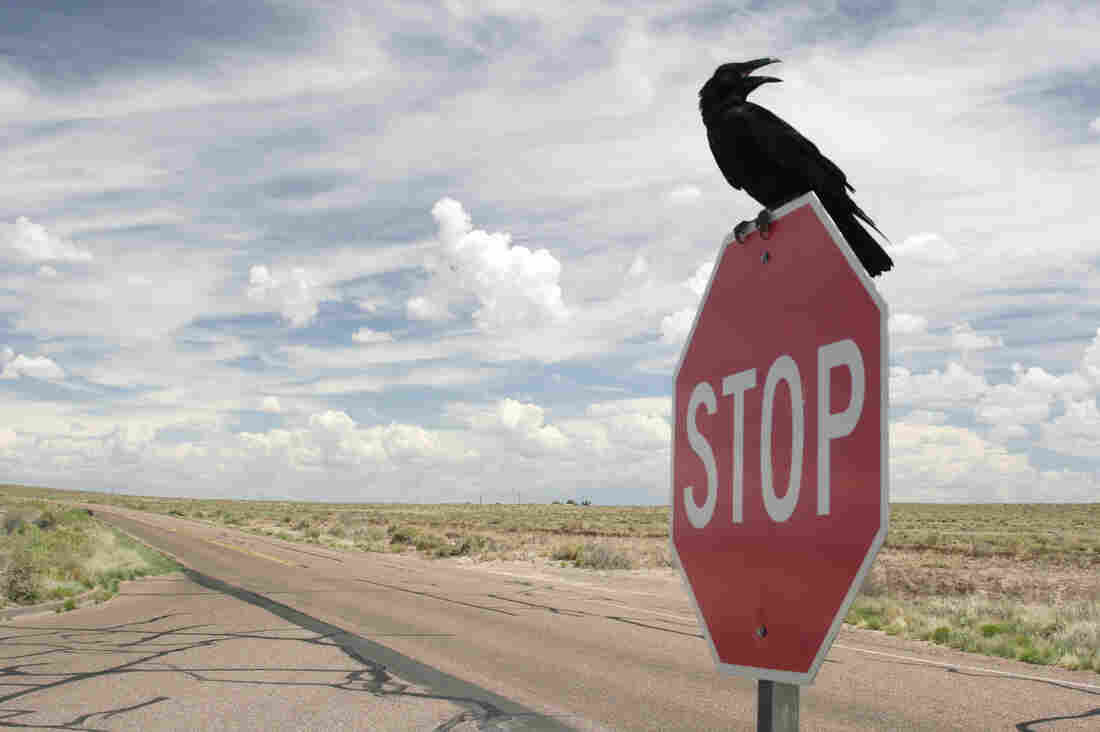 A crow sits on a stop sign along a road running through a desolate landscape.