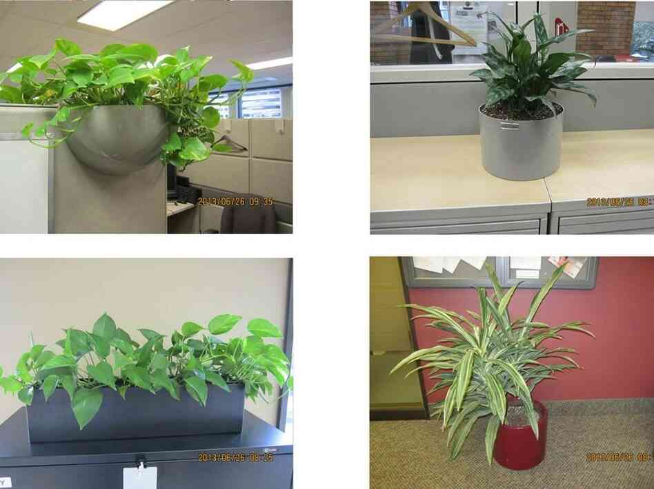 Plants for auction on GCSurplus, the Canadian Government's site for the sale of surplus goods. Plants from the House of Commons may soon join them.