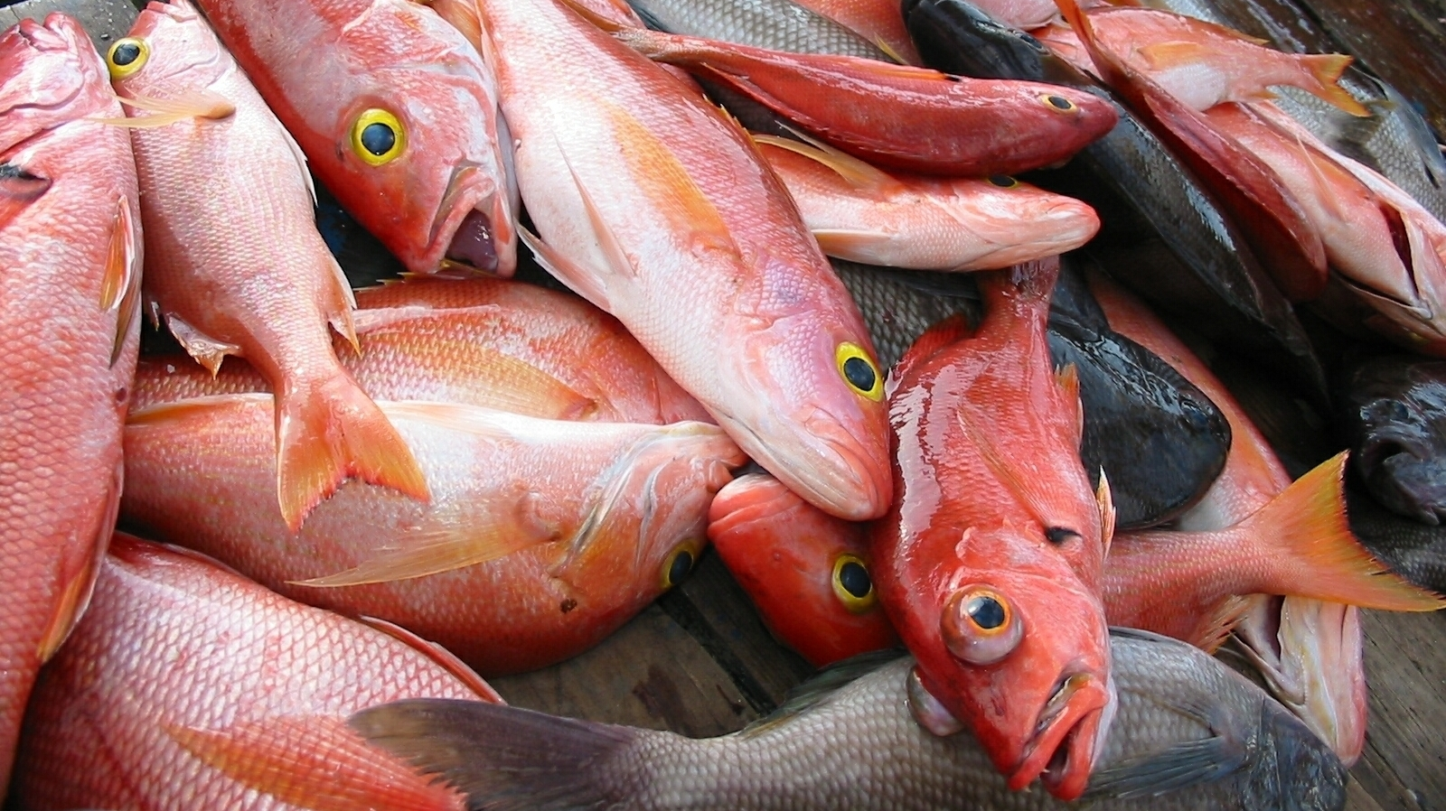 Sexually transmitted food poisoning a fish toxin could be for Fish and seafood