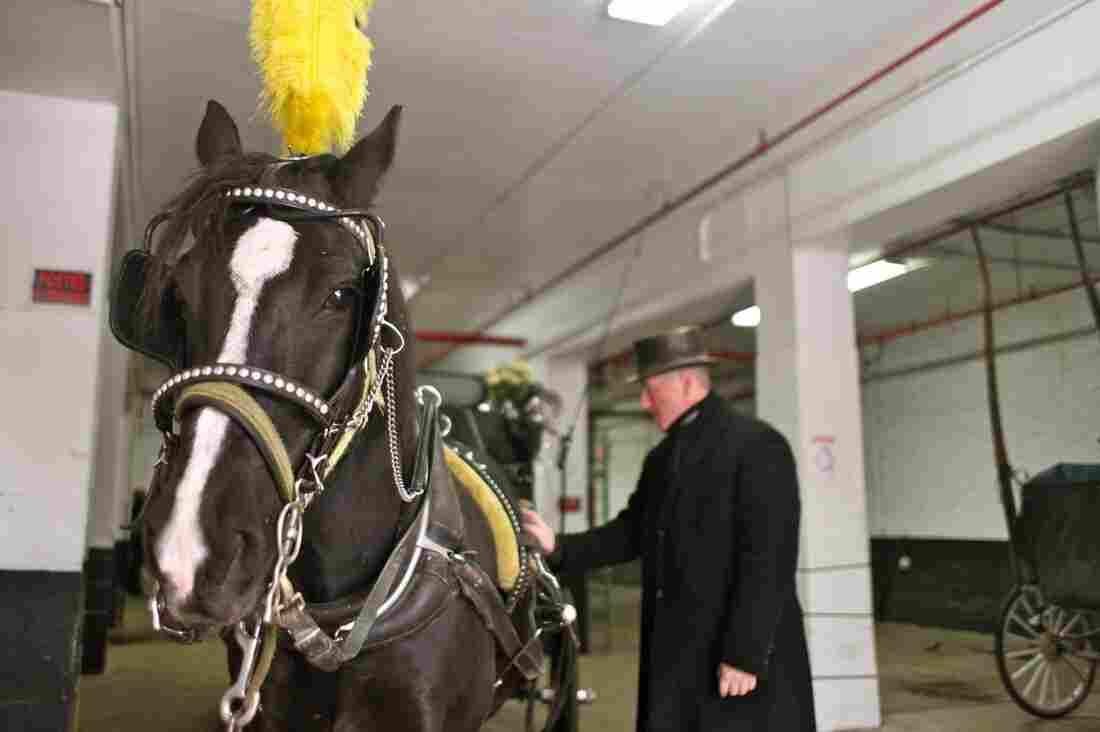Stephen Malone, spokesman for the Horse and Carriage Association, gets his rig ready in New York City. Some say horse-drawn carriages are inhumane; if the mayor has his way, the practice will end.