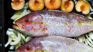 Beware of the big guys: Red snappers from tropical waters sometimes accumulate high levels of the toxin that causes ciguatera. Go for the smaller fish to avoid it.