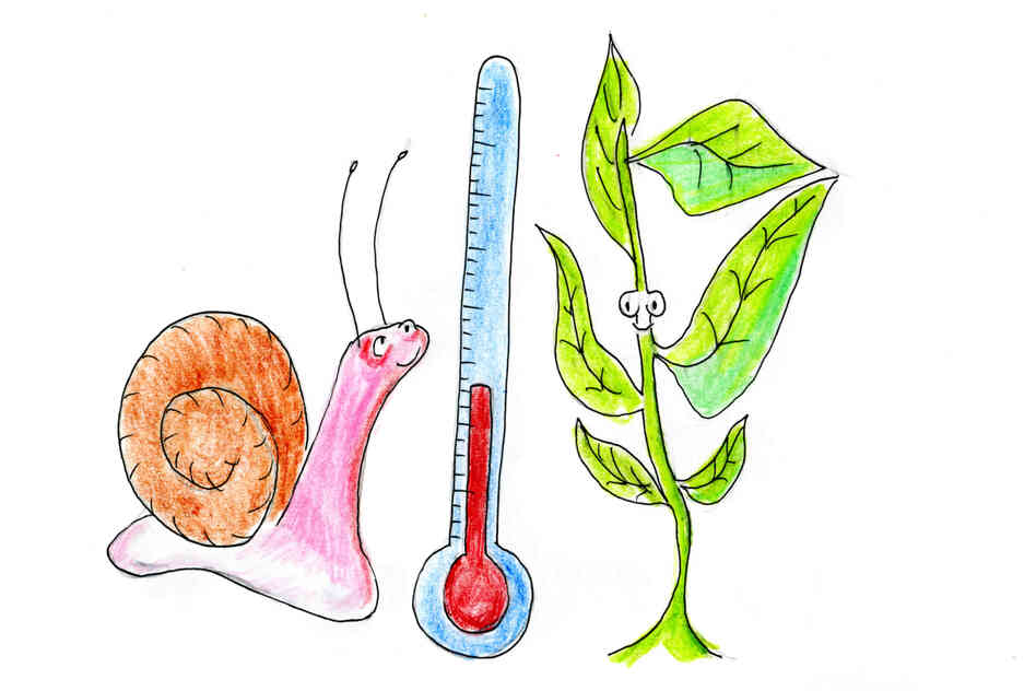 Snails and plants are happy when the temperature's just right.
