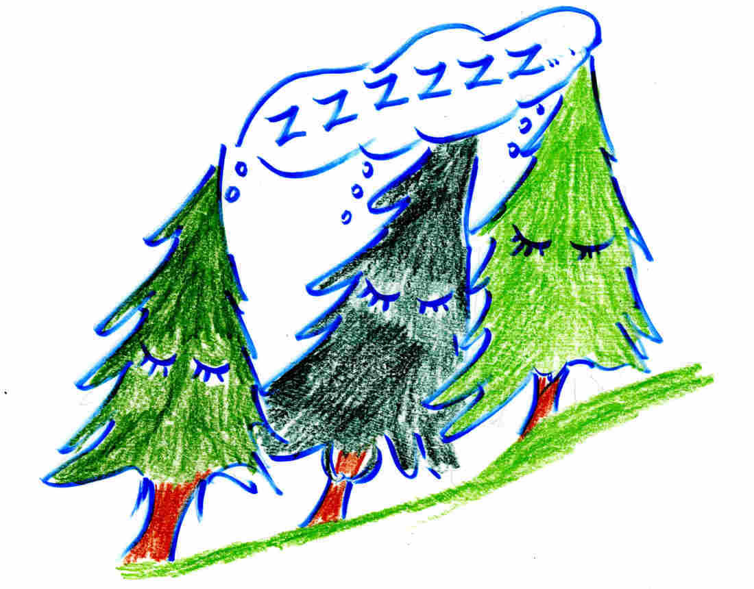Not all trees are shifting out of their comfort zones. Christmas holly, for example, seems to stay put, research shows, despite climate changes to its ecosystem.