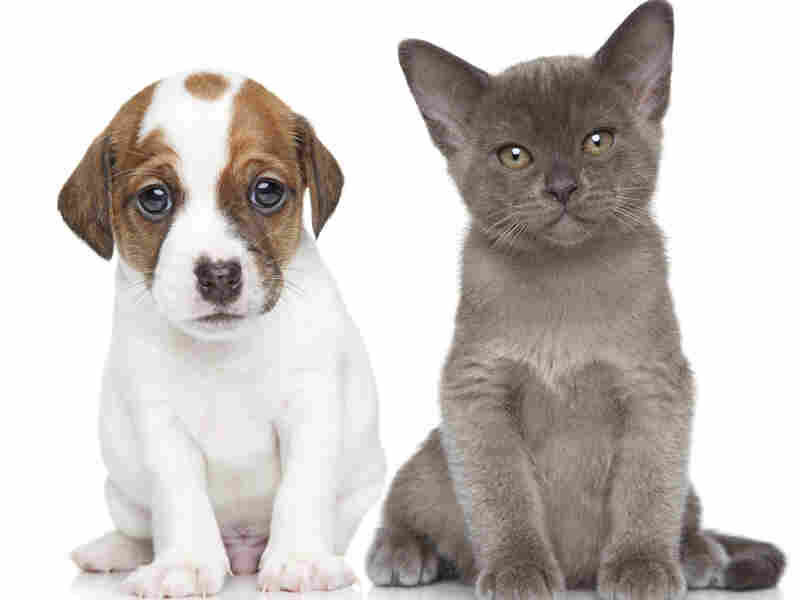 Cat Or Dog? Sure, you can easily tell the difference. But a machine may not be able to guess on the first try.