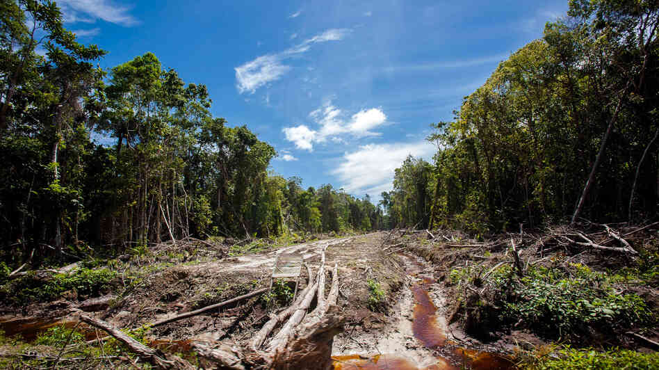 An access road is constructed in a peatland forest being cleared for a palm oil plantation on Indonesia's Sumatra island in 2013.