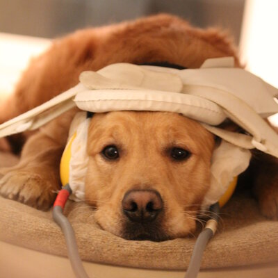 How Dogs Read Our Moods: Emotion Detector Found In Fido's Brain