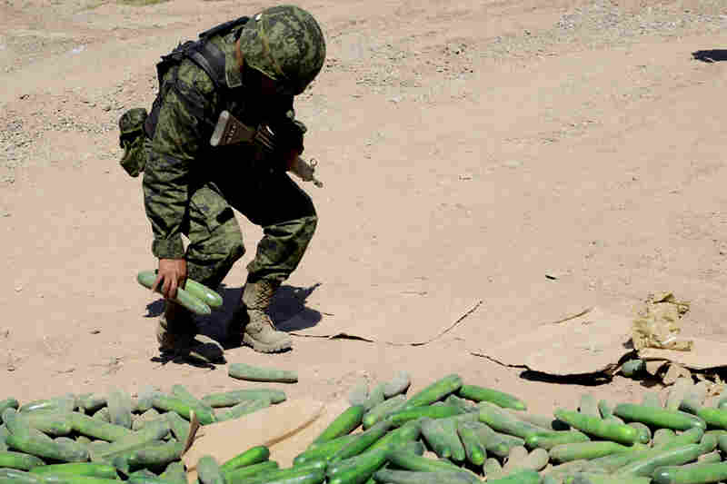 A soldier picks up a fake cucumber commonly used by cartels to smuggle drugs. Four days after Guzman's capture, Mexican marines raided a ranch in Culiacan, where they found a pit filled with empty plastic cucumbers.