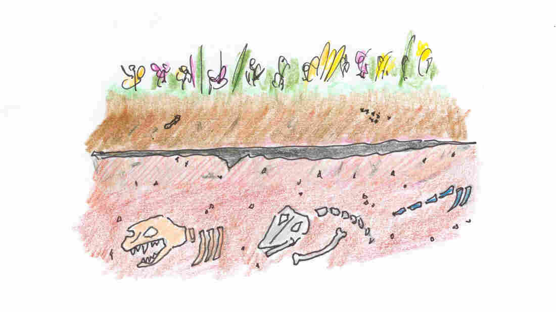 2. Drawing of line of dark sediment underground, above a layer of dinosaur fossils.