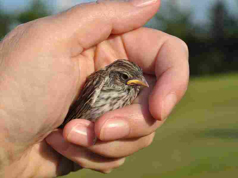 A bird in the hand ...