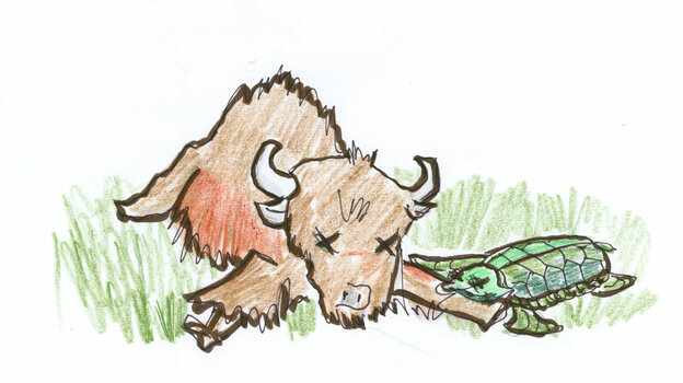 3. Dead buffalo and tortoise.