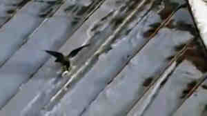 A video of a crow using a jar lid as a sled has been a recent hit on YouTube. But as winter storms continue, many of us are running out of ways to enjoy the snow.