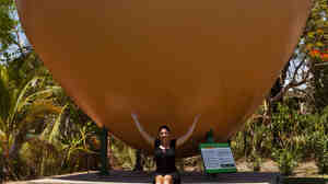 The Big Mango in Bowen, Australia, seen here in 2011.