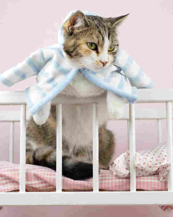Cat's in the cradle, wearing the cat's pajamas.