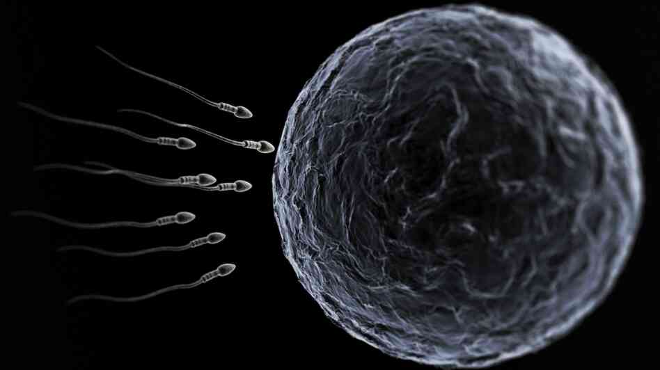 The sperm and te egg