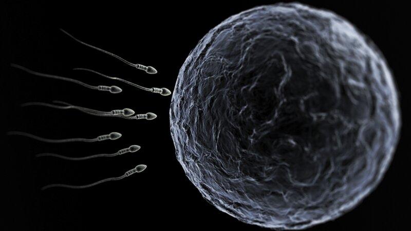 She want Sperm and egg at conception Lenatheplug