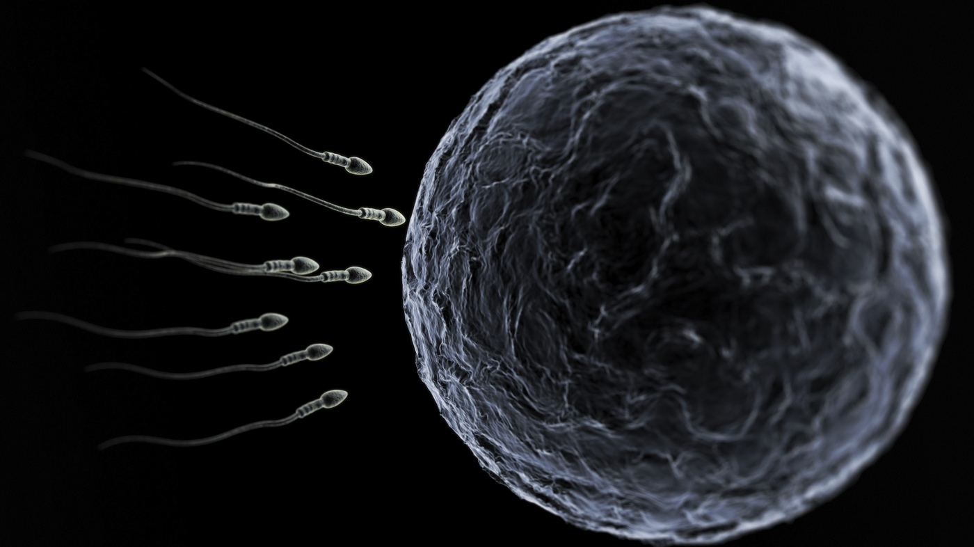 fission egg sperm