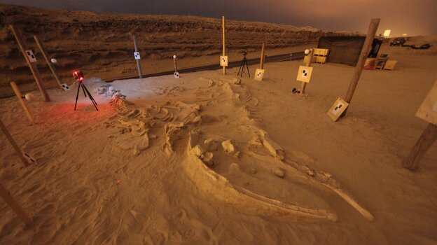 The fossilized remains of a whale that washed up on a shore in what's now Chile more than 5 million years ago.
