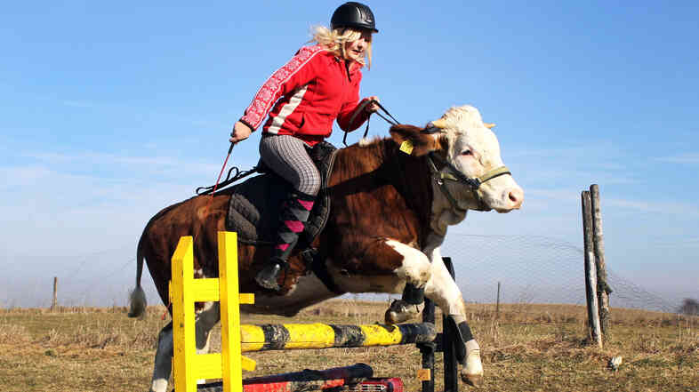 Not quite jumping over the moon but ... : An animal named Luna (get it?) jumps over an obstacle with rider Regina Mayer on her back in the Bavarian town of Traunstein, in southern Germany.