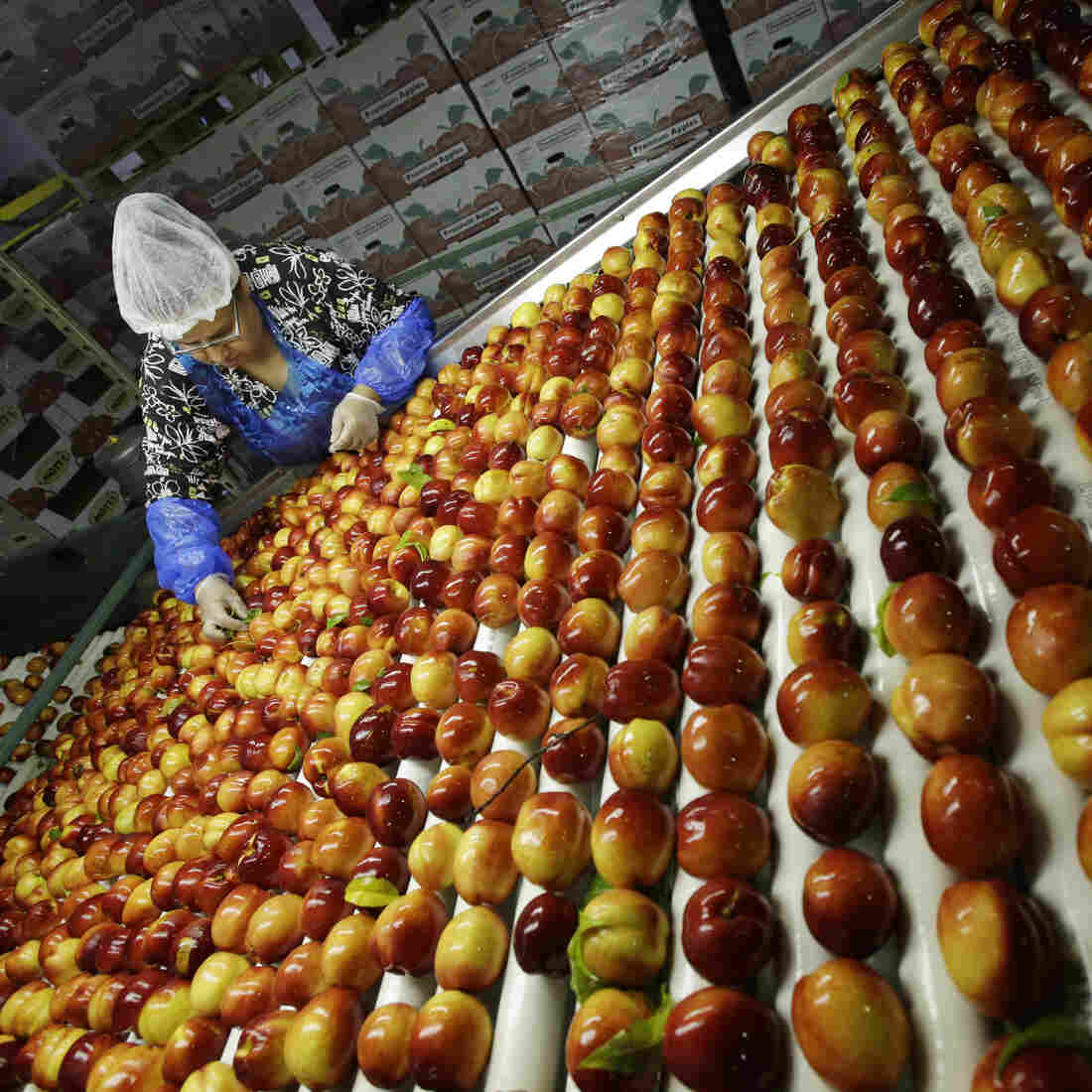 U.S. Lets 141 Trillion Calories Of Food Go To Waste Each Year