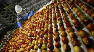 Nectarines are sorted at Eastern ProPak Farmers Cooperative in Glassboro, N.J.