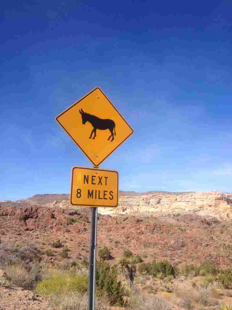The Bureau of Land Management says about 3,600 wild burros live in Arizona.