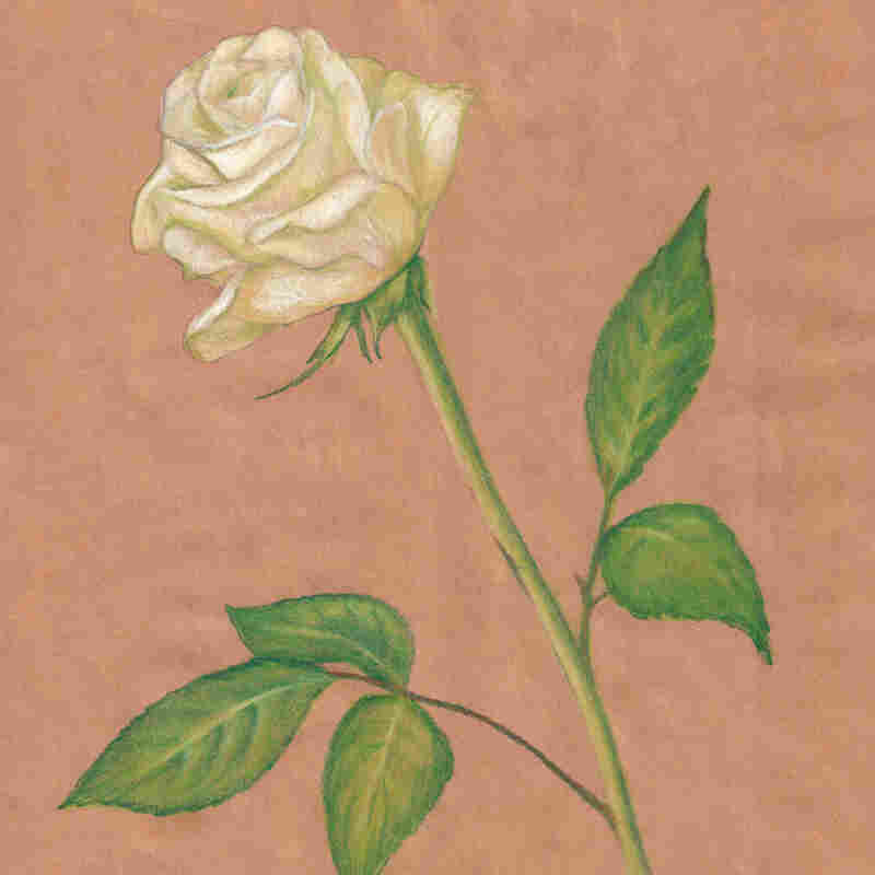 Pastel rose drawing
