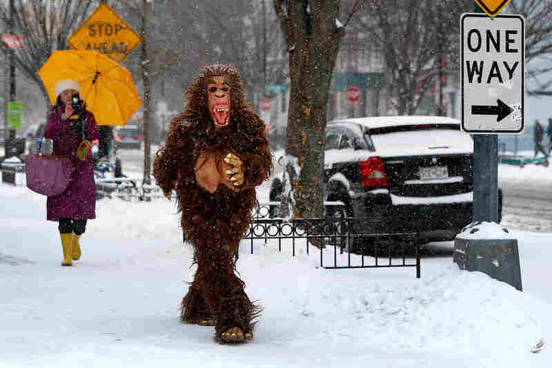 A man dressed in a gorilla costume walks along a snowy 19th Street in Washington, D.C.