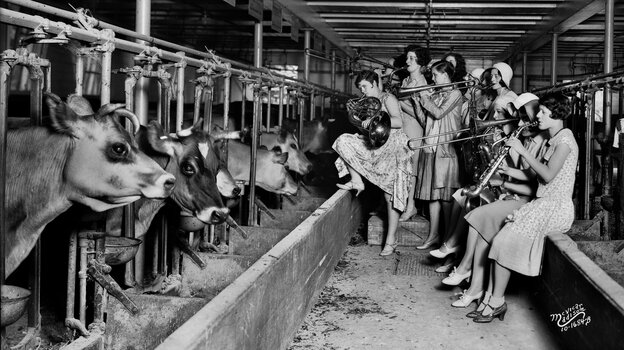 The Ingenues, an all-girl band and vaudeville act, serenade the cows in the University of Wisconsin, Madison's dairy barn in 1930. The show was apparently part of an experiment to see whether the soothing strains of music boosted the cows' milk production.