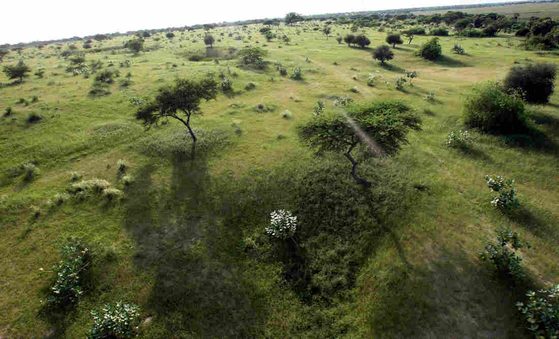 Grasslands along the shores of Lake Chad.