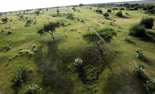 Grasslands along the shores of Lake Chad.