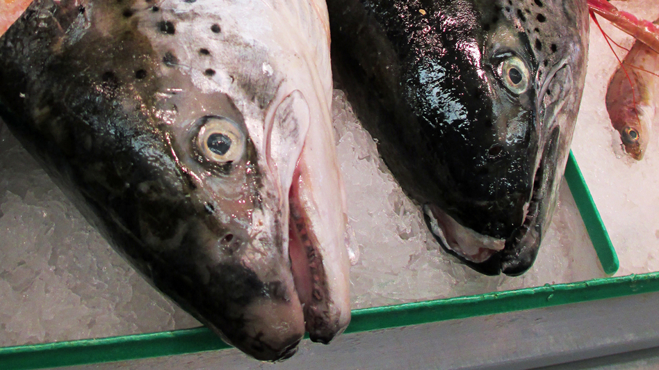 Heads of farmed Atlantic salmon for sale at an Asian-owned grocery store in San Francisco.