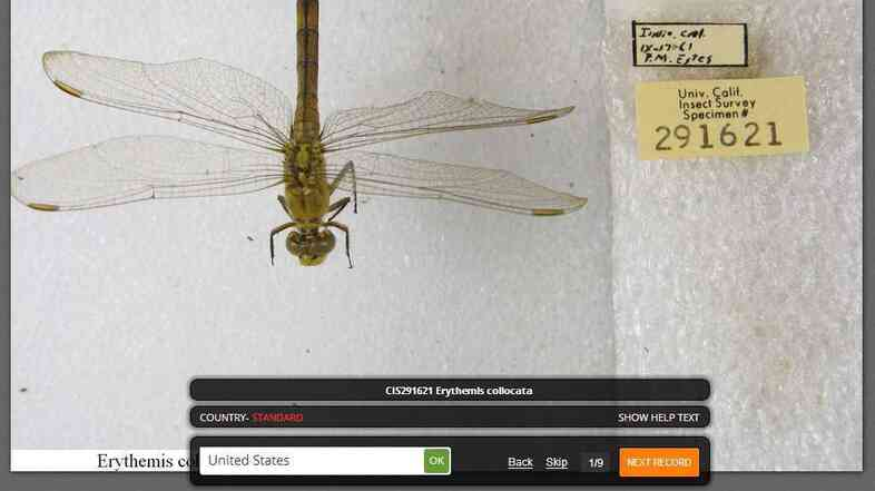 Notes From Nature allows volunteers to digitally catalog thousands of scientific specimens, like this insect from the Calbug project.