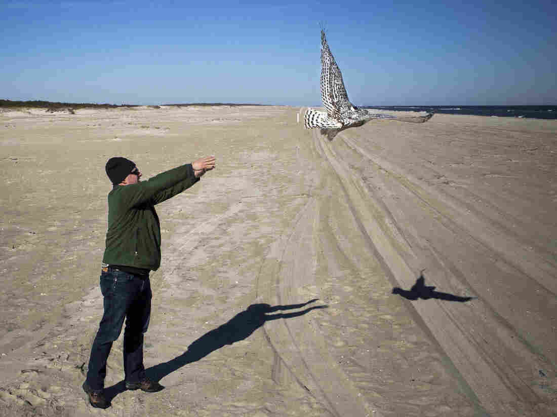 Huy releases Hungerford on the beach, where she circled back and landed among the sand dunes.
