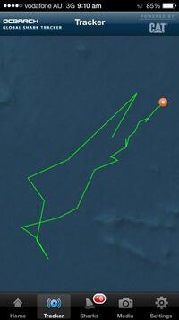 "Is ""Lydia"" messing with us? It's been noticed that part of her route looks something like a shark."
